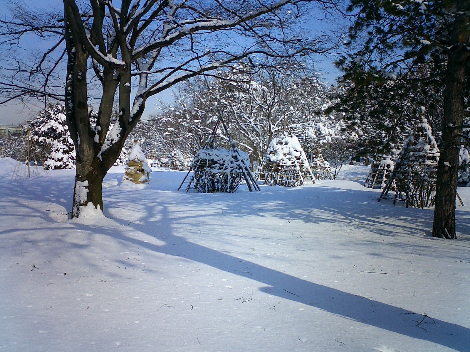 http://kino-ap.eng.hokudai.ac.jp/Hokudai_pictures/winter4O.jpg